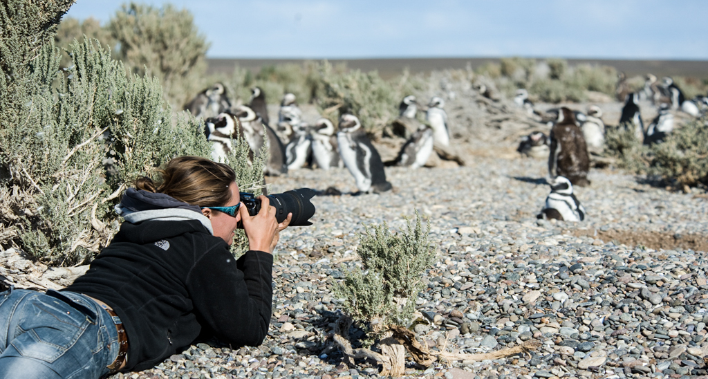 Patagonia_Project_Penguins_002