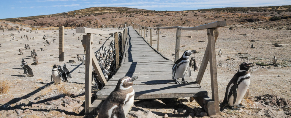 Patagonia_Project_Slider_Patagonia_003