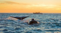 Patagonia_Project_Southern_Rightwhale_Camp_11