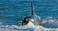 Patagonia_Project_Tours_Orca_Camp_06