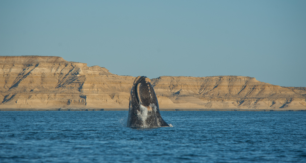 Patagonia_Project_Whales_003